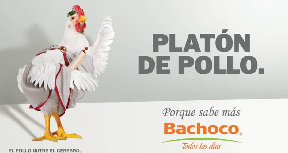 Platón de pollo