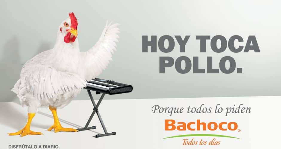 Hoy toca pollo