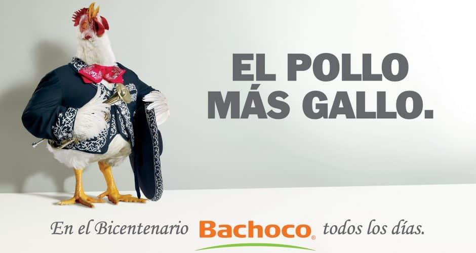 El pollo más gallo