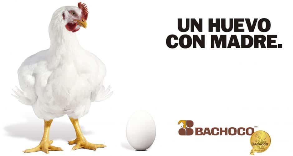 Un huevo con madre