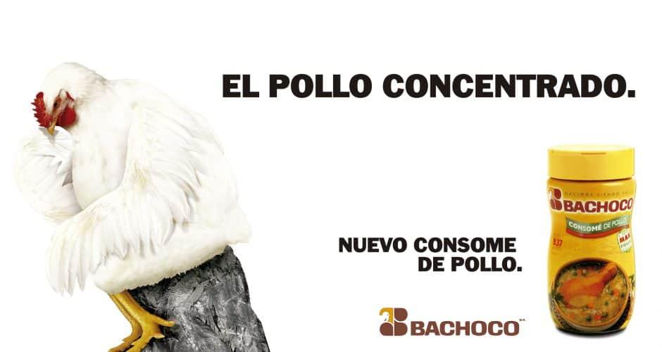 El pollo concentrado