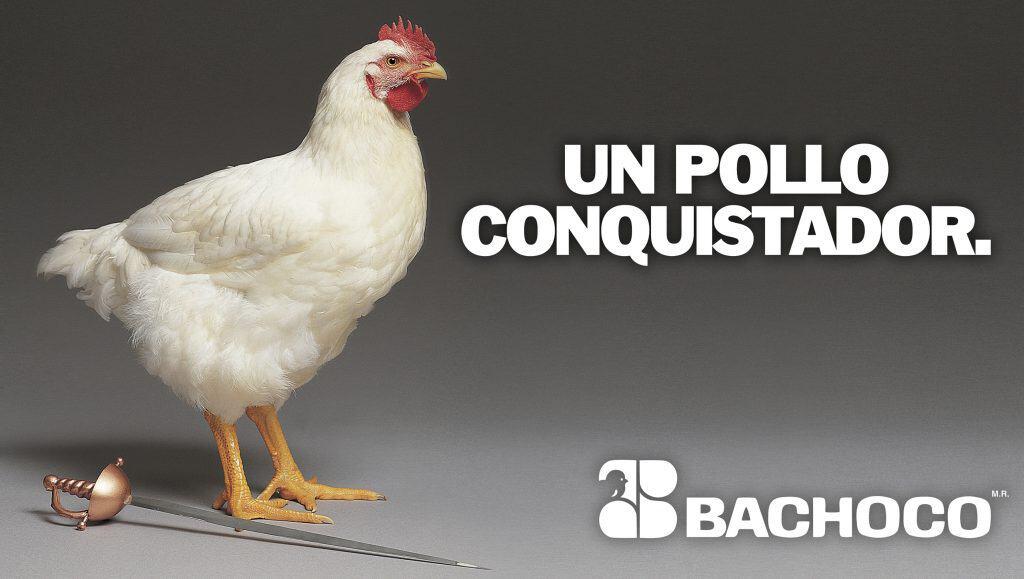 Un pollo conquistador