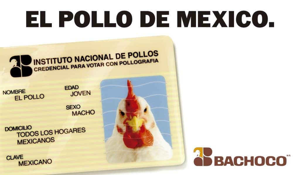 El pollo de México