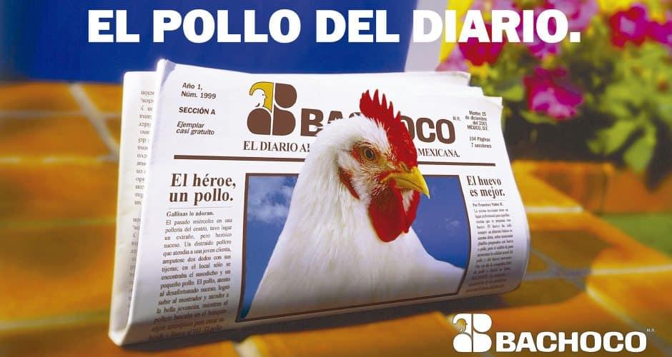 El pollo del diario