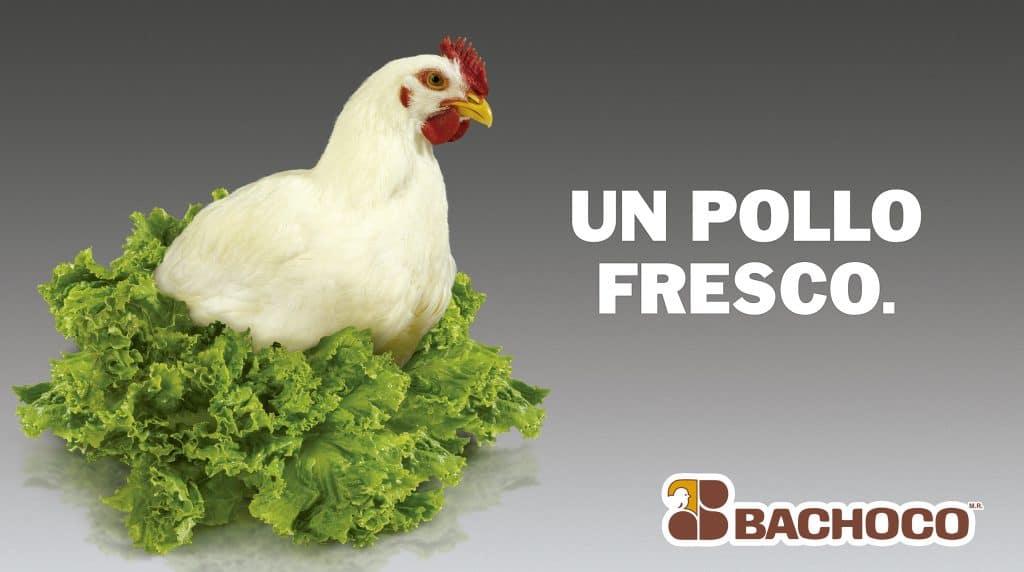 Un pollo fresco