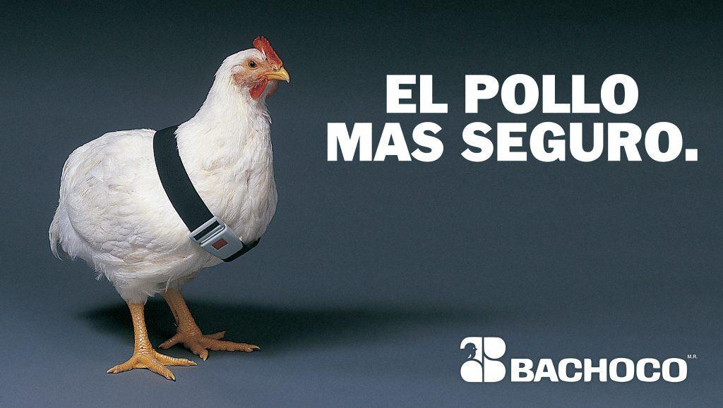 Un pollo más seguro