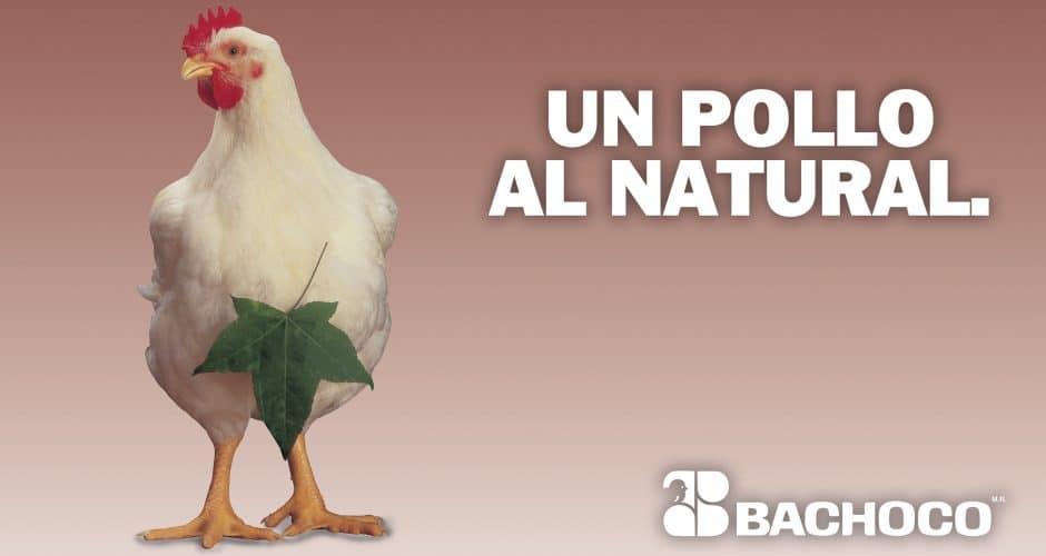 Un pollo al natural