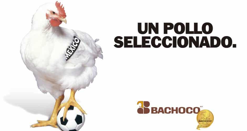 Un pollo seleccionado