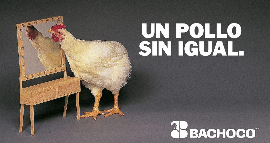 Un pollo sin igual