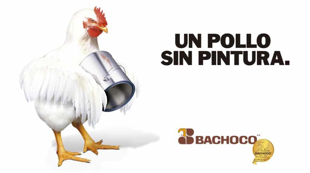Un pollo sin pintura