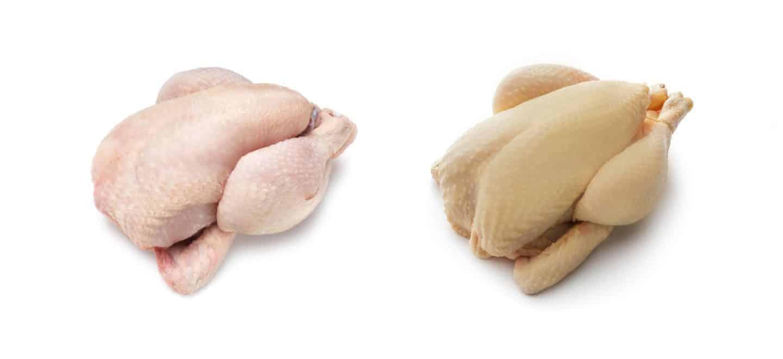 Los pollos con piel blanca o amarilla son igual de saludables y nutritivos.