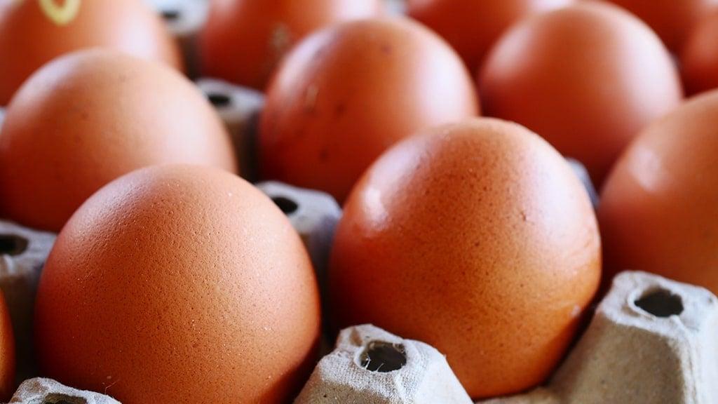 El sabor del huevo directo a tu mesa