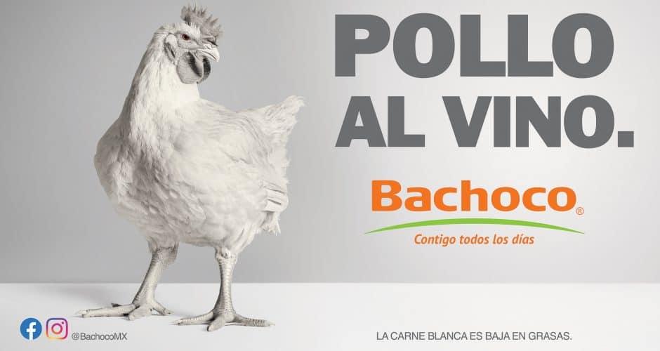 Pollo albino