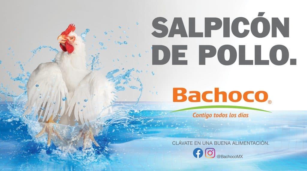 Salpicon de pollo
