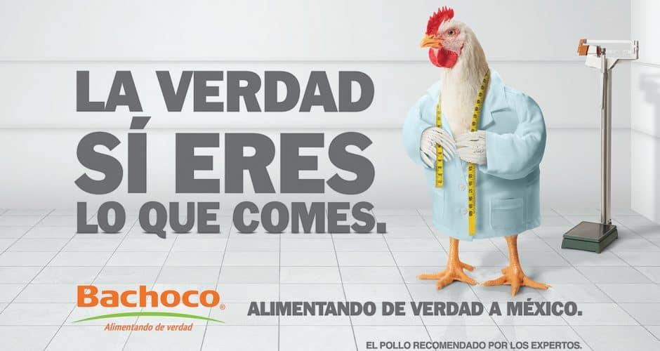 POLLO-NUTRIOLOGO-BACHOCO