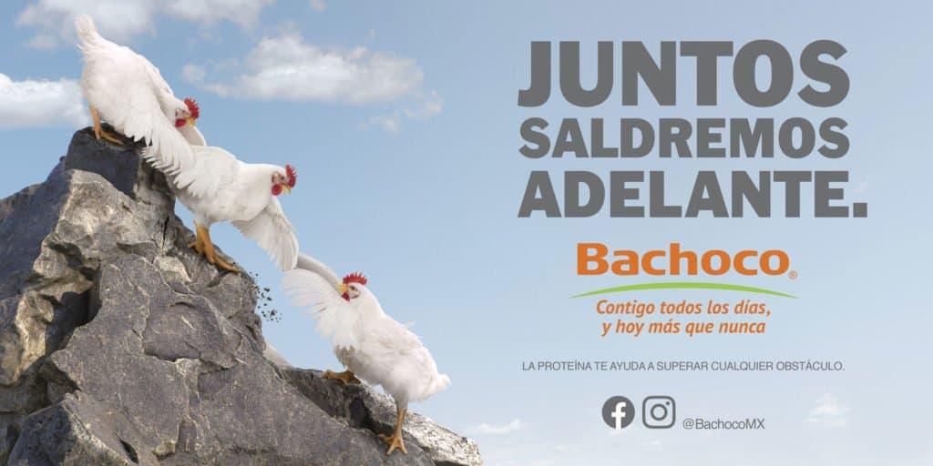 BACHOCO JUNTOS SALDREMOS ADELANTE