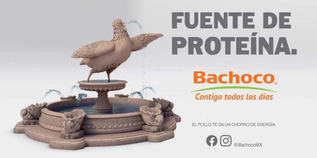 Fuente de proteina Bachoco