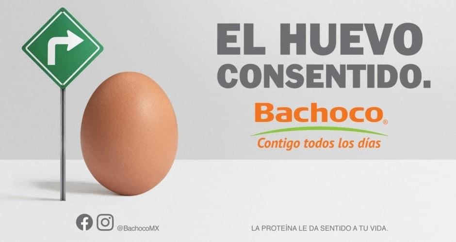 bachoco huevo consentido