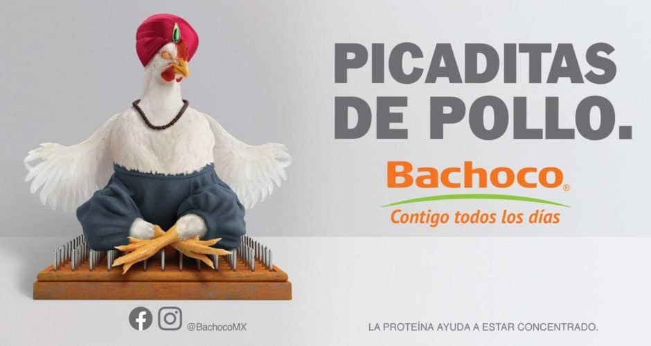 bachoco picaditas de pollo